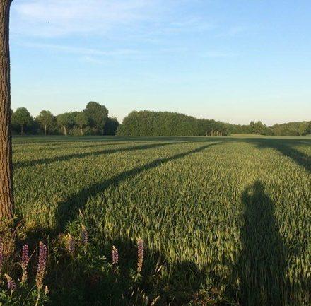 Meer ruimte voor economie in nieuwe Drentse omgevingsvisie