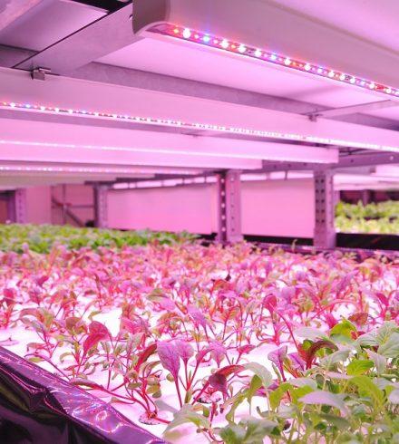 De boerderij van de toekomst: vertical farming