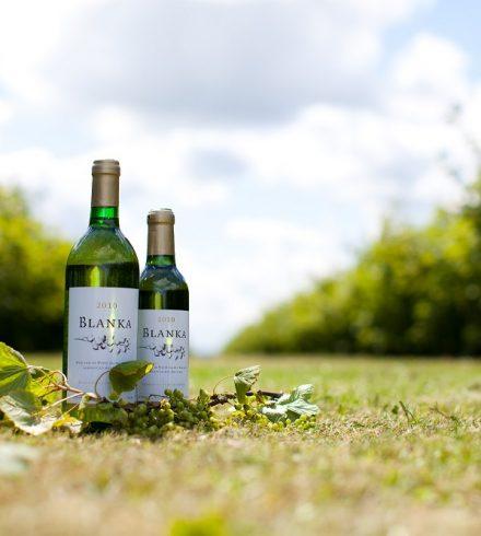 Made in Groningen: Blanka-wijn van Landgoud