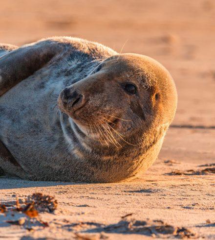 Zoek de zeehond (én alle andere verborgen schatten van Terschelling)